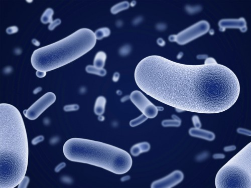 bigstock-close-up-view-of-bacteria-12354305