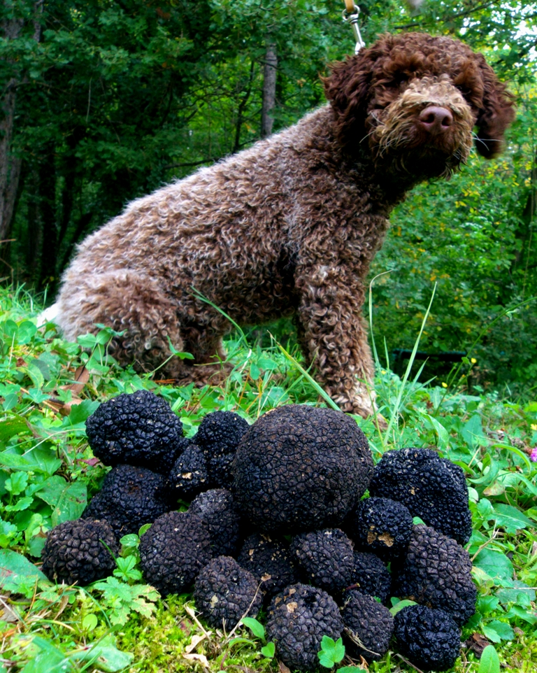 http://www.dreamstime.com/royalty-free-stock-photography-truffles-dog-image18861977