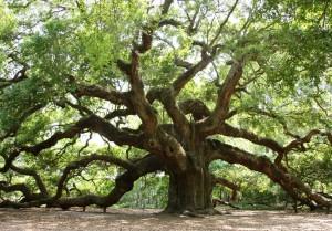 strom kopie